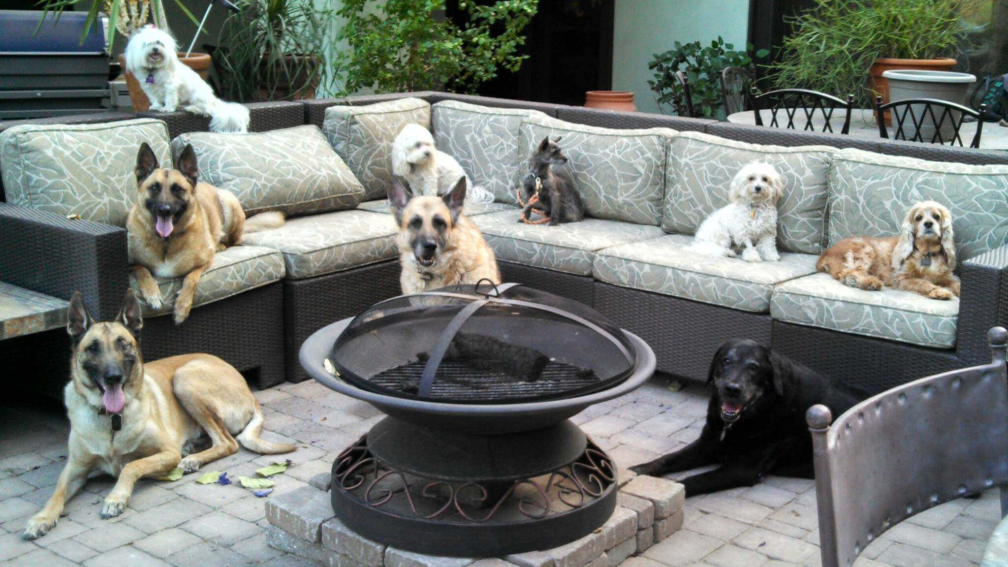 Dogs on Patio Furniture